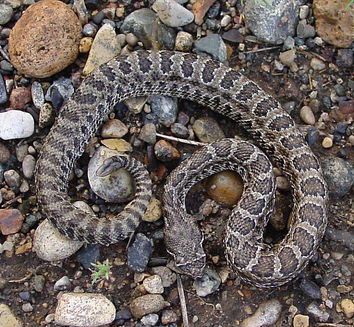 wpid-rattlesnake-2012-08-2-22-29.jpg