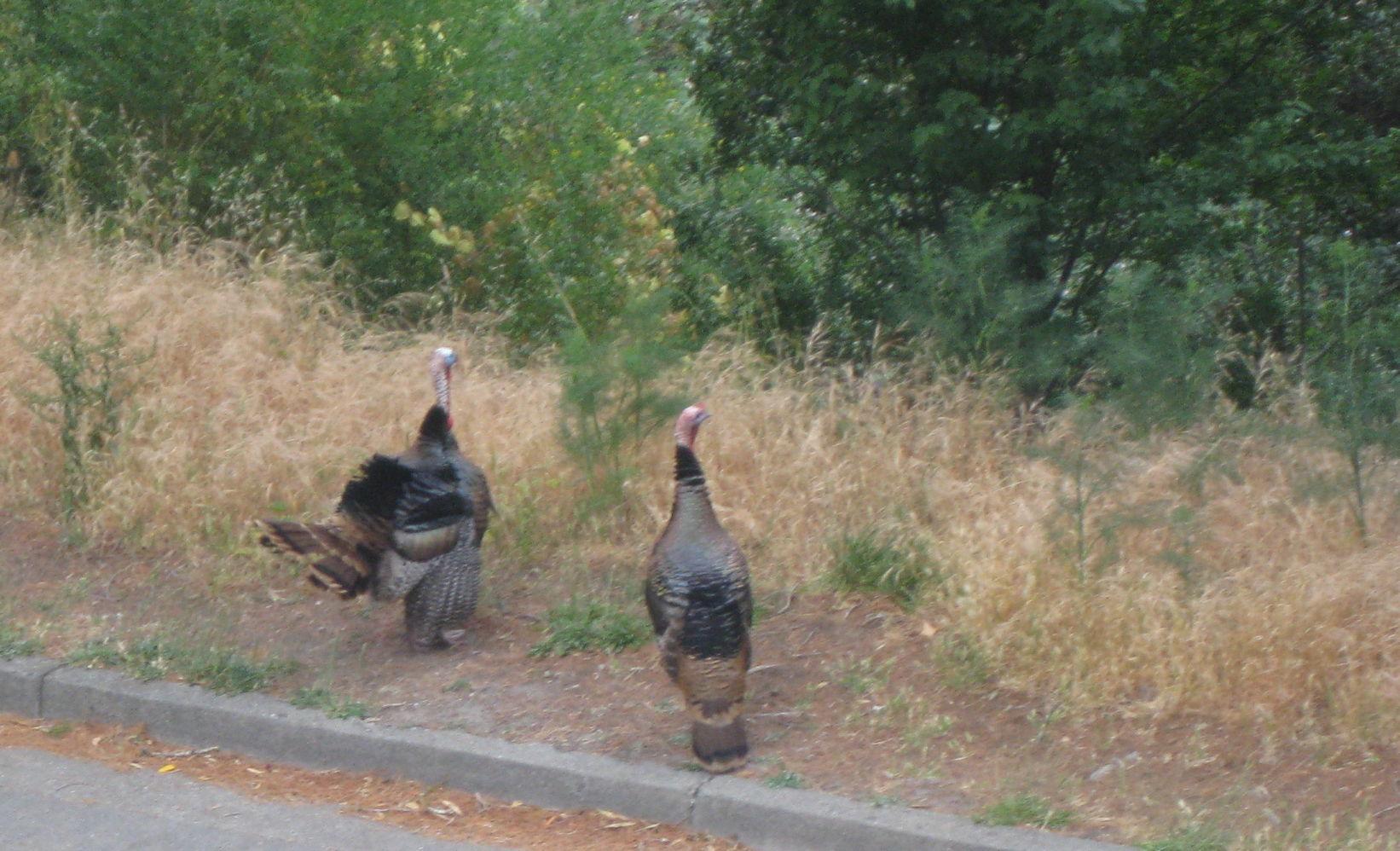 wpid-turkeytrot3-2014-05-31-10-21.jpg